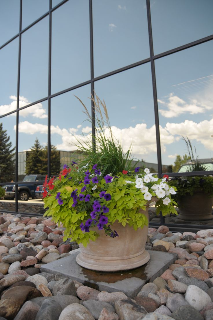 25 best summer flowers images on pinterest summer flowers beautiful planter full of blooming flowers in front of colorado springs business dhlflorist Choice Image