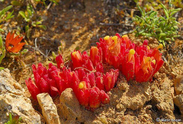 Namaqualand spring wild flowers ...