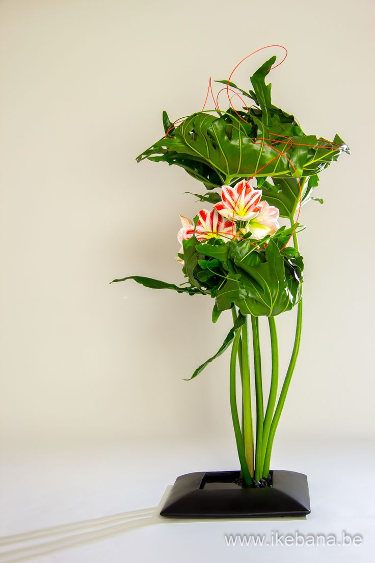 Sogetsu Ikebana with Monstera Leaves - Ilse Beunen