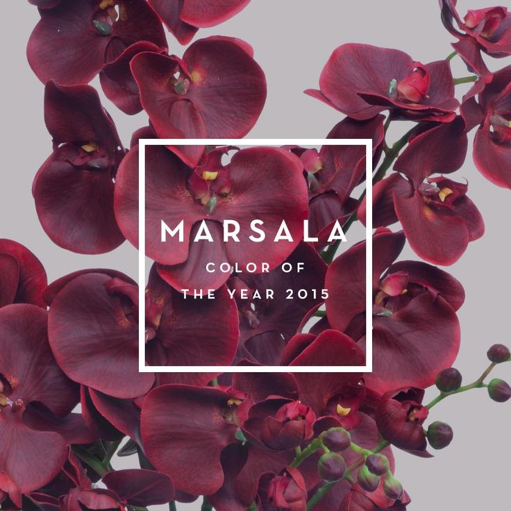 One of the colors projected for color of the year 2015. Marsala.
