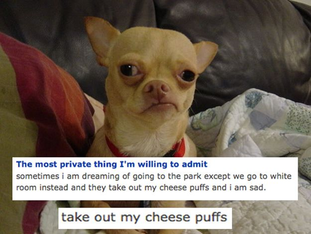 The dog who can't seem to shake some repressed memories. | The 17 Creepiest Dogs You Meet On OkCupid