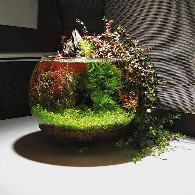 Still one of my favorite bowls by Reddit user SteamBoatPilot.