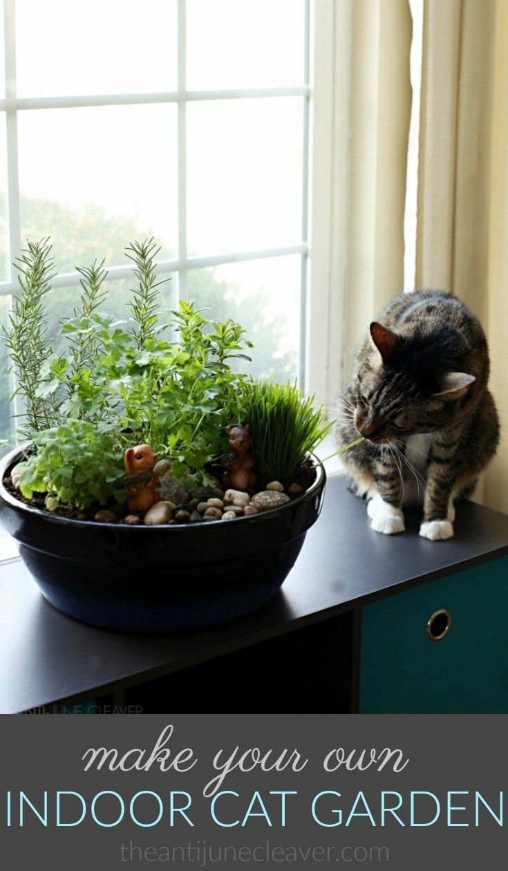 How To Make A Diy Indoor Cat Garden The Anti June Cleaver Indoor Cat Garden Cat Garden Cat Plants