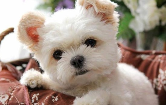 Daily Cuteness Puppies