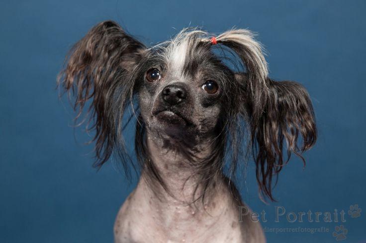 Hondenfotograaf Amsterdam - PetPlan Winner actie - Honden op de Winnershow-24
