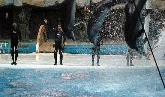#Dolphinpark is consist of #birds garden #minicircus and #dolphinarium #Kish #Iran #Irantraveler #tourismiran #visitiran http://flytogetiran.com/irantours/
