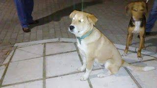 Το σκυλάκι της φωτογραφίας κυκλοφορεί στον Φοίνικα Θεσσαλονίκης εδώ και μία εβδομάδα. Μήπως το ψάχνει κανείς?