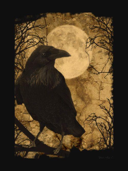 : Crows Ravens, Autumn Fall, The Ravens, Athabascan Myth, Full Moon, Bestiari Parlor, Edgar Allen Poe, Pacific Northwest, Halloween Art