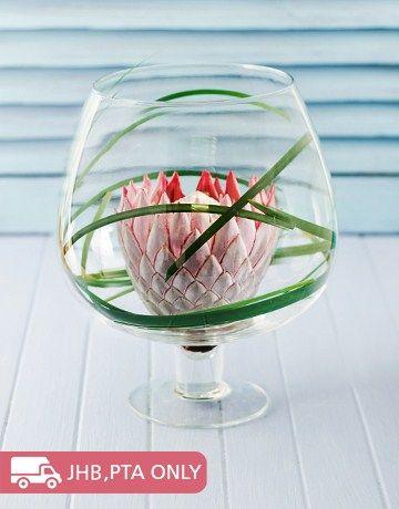 Single Protea in a Brandy Vase
