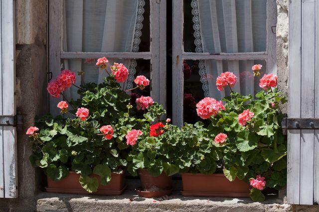 Les 67 meilleures images du tableau jardini re et rebord - Conseils jardinage pour les plantes en pots ...