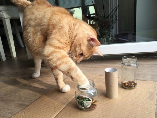 Intelligenzspielzeug für Katzen: Clio an seinem selbstgemachten Fummelbrett