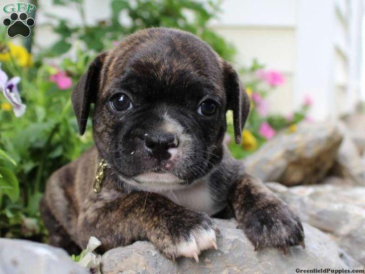 Wayne Puppies - Wayne, NJ - Pet Supplies