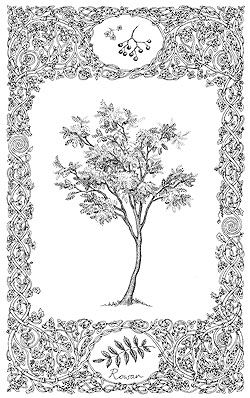 Illustration of a Rowan tree