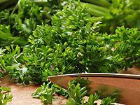 Jak pěstovat zelenou petrželku, v kuchyni nepostradatelnou bylinku?