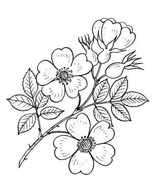 Выкройки и сборка цветов. Обсуждение на LiveInternet - Российский Сервис Онлайн-Дневников
