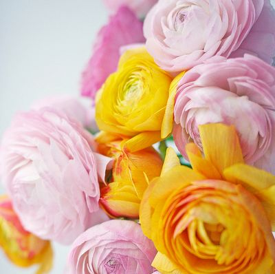 .: Beautiful Flower, Pink Flower, Yellow Rose, Spring Flower, Orange Flower, Color Combos, Color Combinations, Peonies, Yellow Flower