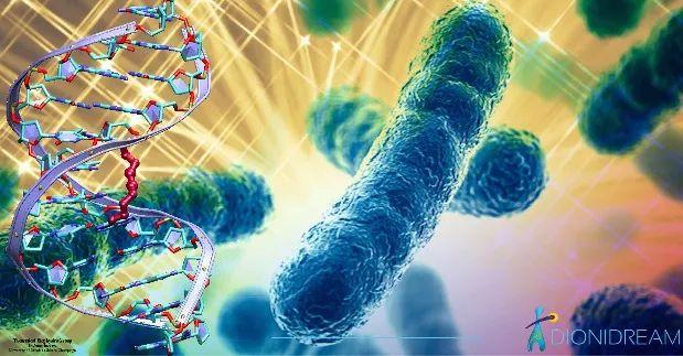 Prof. Knight:I tuoi batteri intestinali sono più potenti del tuo DNA-I batteri che vivono nel nostro corpo sono molto più numerosi delle stesse cellule ed hanno un patrimonio genetico da 100 a 1000 volte maggiore in grado di determinare la personalità, caratteristiche estetiche e longevità-Dal 2007, quando è iniziato il Progetto Microbioma Umano di catalogo dei microrganismi nel nostro corpo, la ricerca degli di tali organismi sul corpo è cresciuta rapidamente con ogni anno che passava.