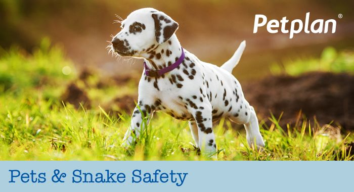 Pets and Snake Safety