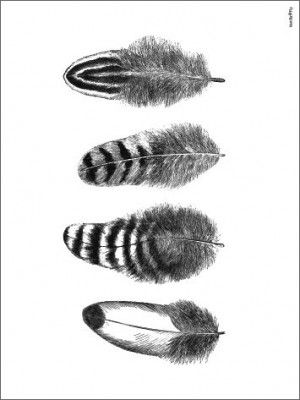 Poster VANILLA FLY - Feathers