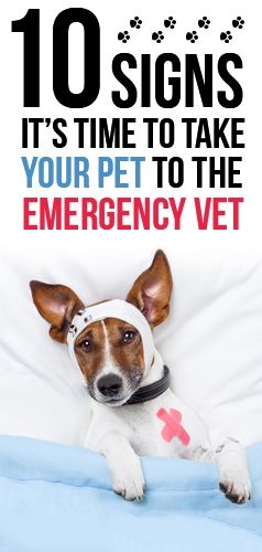 Ten signs it's time to take your #pet to the emergency #vet