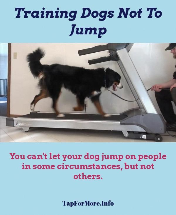 Stop Dog Jumping And Pvc Dog Playground Check The Pic For Lots