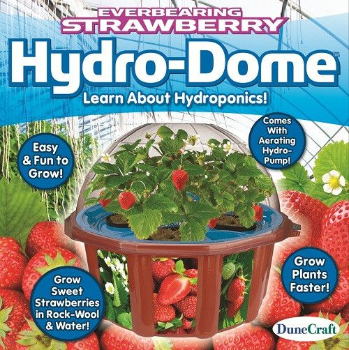 Everbearing Strawberry Hydro-Dome - Strawberries Hydroponic Grow Kit