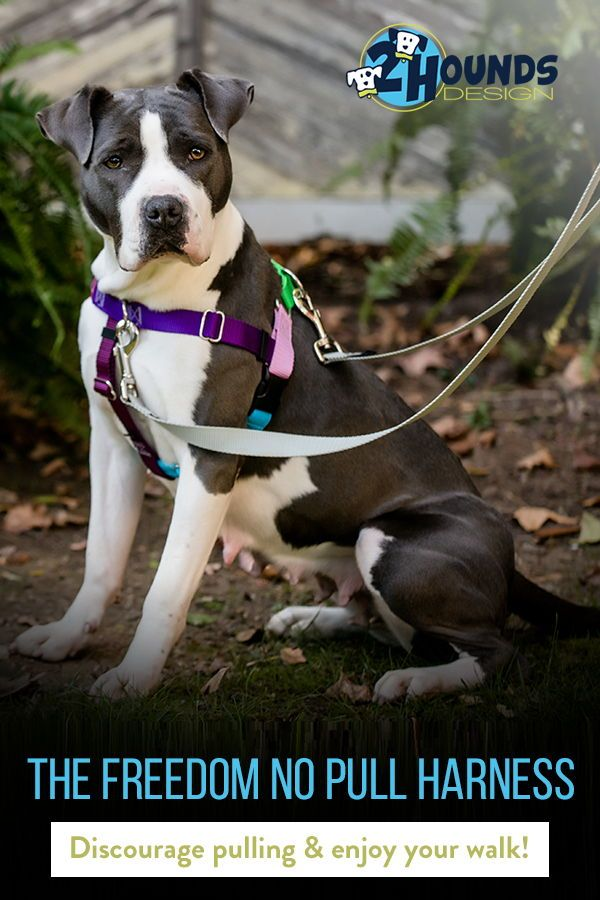 Freedom No Pull Harness 2 Hounds Design Dogs Harness Your Dog