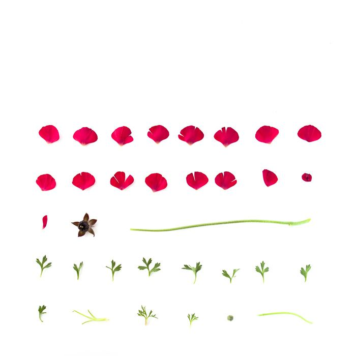 Sarah Blythe - Deconstructing Flora