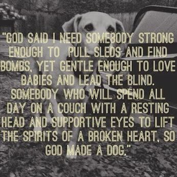 God created each animal for a purpose. To love unconditionally; to be a best friend; to protect. Our pets are like children and should be taken care of since they provide so much love no matter how you feel about them. Dogs and cats, both are precious. ~Me  #dogs #cats #God #life