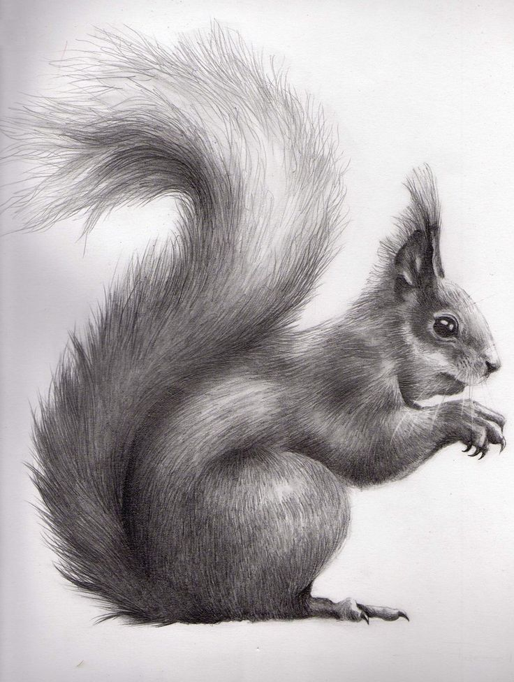 20 best Pencil Drawings of Animals images on Pinterest ...