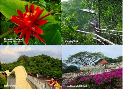 Labrador Nature and Coastal Walk - The tranquil nature spots along this 2.1-km path not only contain 40% of the endangered and vulnerable plant species in Singapore, they are also an oasis of calm for visitors amidst the hustle and bustle of the city.