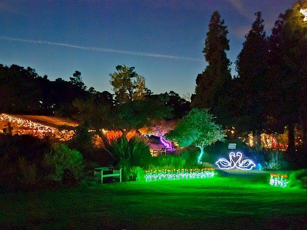 e83570d37920e5a20cabfd557e262995  fort bragg festival of light - Festival Of Lights Mendocino Coast Botanical Gardens