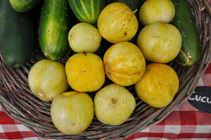Strattons Farm: CSA Newsletter ~ Week 12