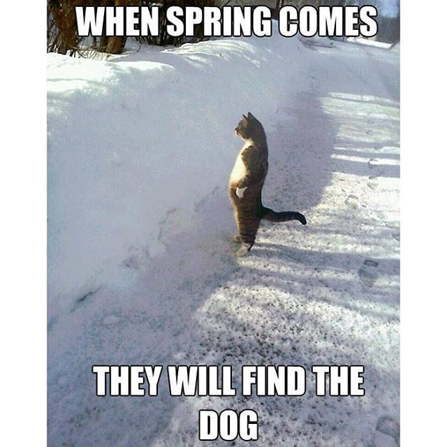 Spring Countdown Time Http Countdown Onlineclock Net Countdowns Spring Spring Springcountdown Funny Wednesday Memes Wednesday Memes Wednesday Humor