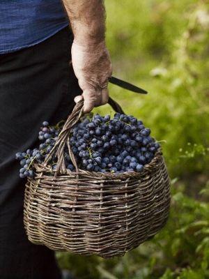 .harvest time
