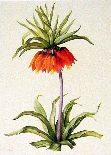 1986 Vintage Book Plate Redoute Flowers Crown Imperial and Persian Fritillary p101