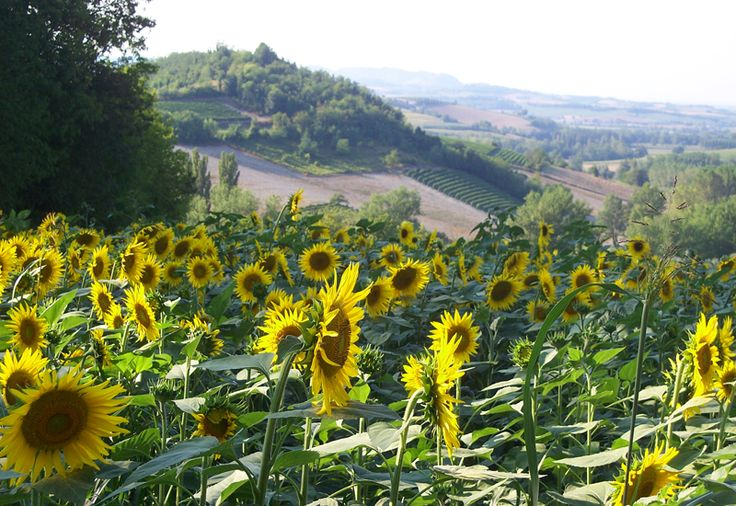 Regione Piemonte, Monferrato, Sala Mon.to (AL) Italy