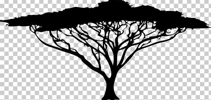 African Trees Silhouette Drawing Png Acacia Africa African African Trees B Acacia Africa African Dr African Tree Tree Silhouette Silhouette Drawing