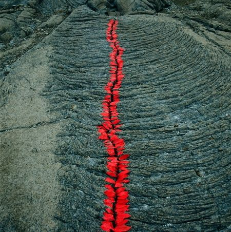 Land Art - Nils Udo - Reunion island