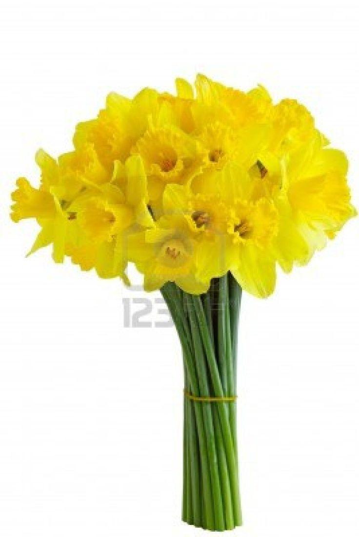 the 25 best daffodil bouquet ideas on pinterest daffodil