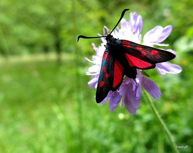 21 mooie kleurrijke vlinder - photo #9