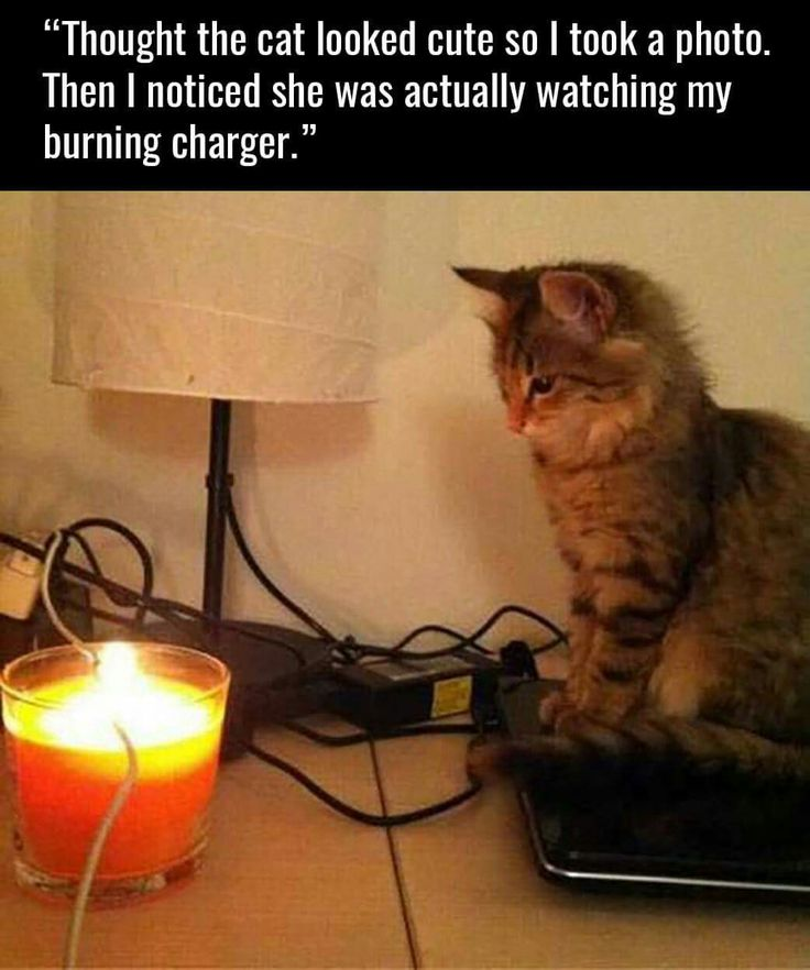 Cats can be evil... But so cute and fluffy!!