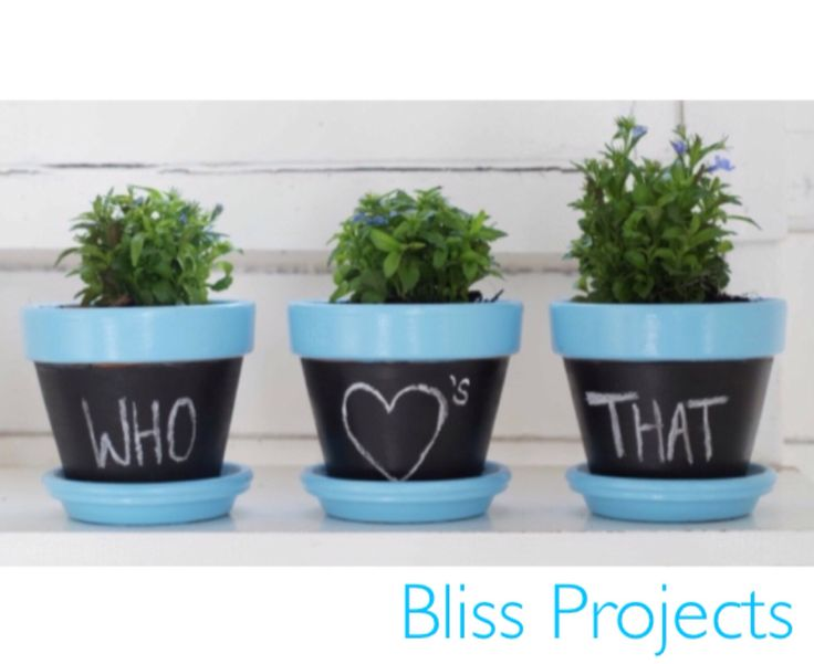 Chalkboard pots. Easy, simple and clean way to add life and colour way to your interior. Change the colour to whatever you desire. Use as a chalkboard and change or update the title as often as you want. #blissprojects #terracotta #chalkboard #lifeandcolour #herbs #potplants #kitchendecor #gardening #diy #easyherbs #diyherbs #healthygreens #organic