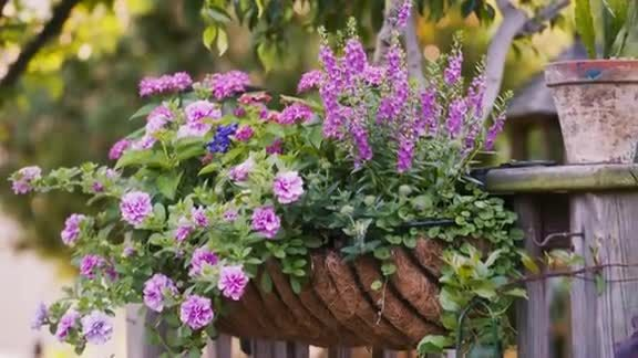 Best Flower Combinations For Hanging Baskets : Best images about the window box on