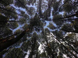 Lajur Pejalan: Main Sebentar ke Goa Gajah dan Hutan Pinus Imogiri