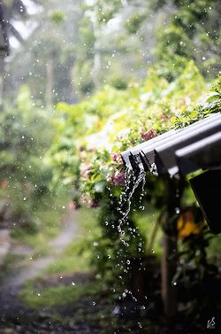 Rain - the sights, sounds, and smell;  especially after long, hot days.    ~blissful country life / the beauty of rain