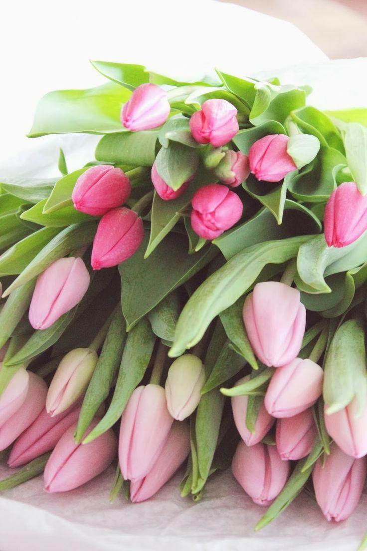 tulip ✩