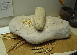 The upper hand stone was used to grind grain on the lower quern stone