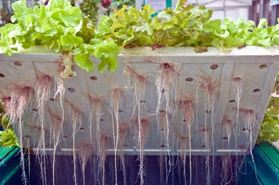 Hydroponic gardening is the art and science of growing plants without soil. Find out how to get your hydroponic garden started.