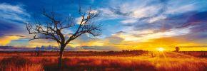 Deserto Quercia al tramonto - Northern Territory, Australia